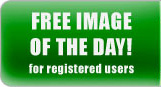 Go to Free Image of the Day Download Page